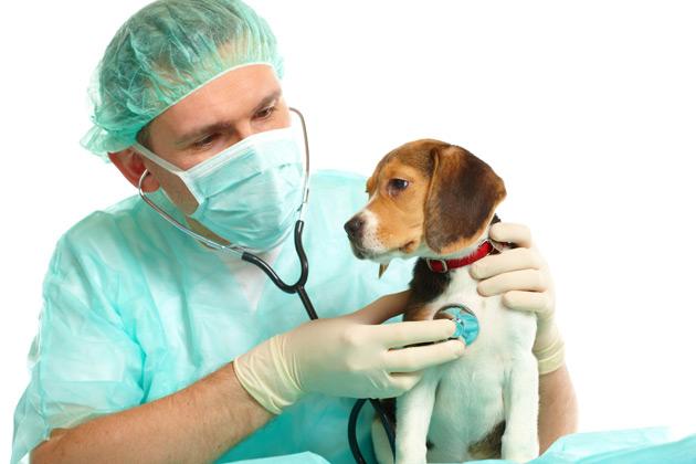 http://www.petshopnovopet.com.br/wp-content/uploads/2014/06/clinica-veterinaria.jpg